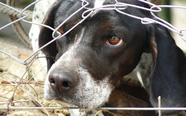 Con las reformas también se aumenta la sanción por el maltrato animal que será de dos a seis meses de cárcel. Foto: Pixabay
