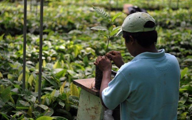 El curso 'Gestión y Mitigación de Riesgo de Plaguicidas' busca mejorar el uso de agua y plásticos en el campo. Foto: AFP.