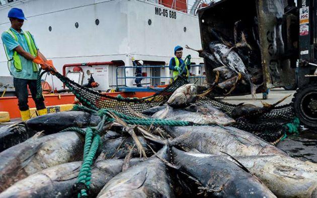 Ecuador es el segundo productor y exportador de atún del mundo y esta actividad representa más de 1.151 millones de dólares. Foto referencial: El Telégrafo