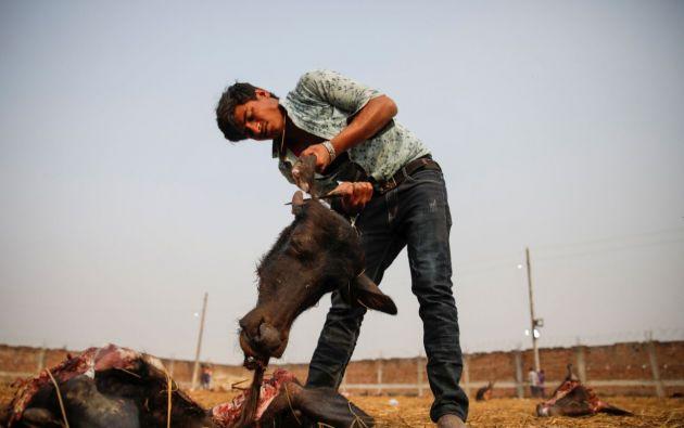 Más de un millón de devotos hindúes acudieron al sangriento festival a presentar sus ofrendas a la diosa Gadhimai. Foto: Reuters.