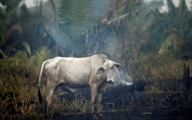 El sector ganadero es responsable del 16,5% de las emisiones de gases de efecto invernadero en el mundo. Foto: Reuters