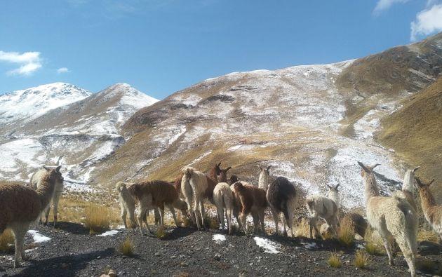 A más del cambio climático, en Bolivia se acelerará el deshielo por el negro hollín del desvastador incendio de la Chiquitania. Foto: Fundación Ponchos Blancos.
