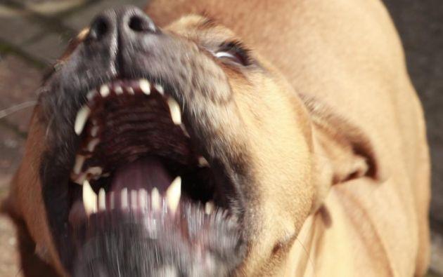 Los cuatro perros tuvieron que ser abatidos debido al feroz ataque. Foto de archivo.