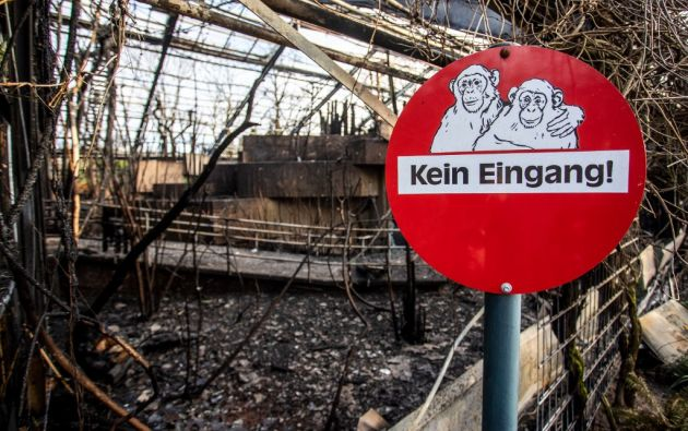 Los monos del zoo de Krefeld, en Alemania, murieron cuando se incendió su guarida. Foto: AFP