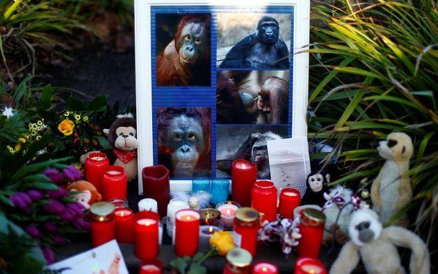 El mortal incendio acabó con la vida de unos 30 simios. Foto: Reuters