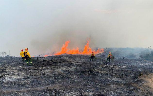 Aún no se tienen reportes sobre las hectáreas afectadas ni sobre el origen del flagelo.