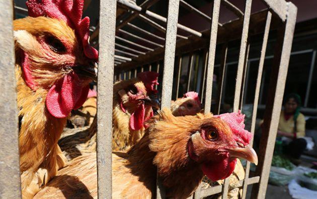 El Ministerio de Agricultura chino informa de un brote de la gripe aviar H5N1