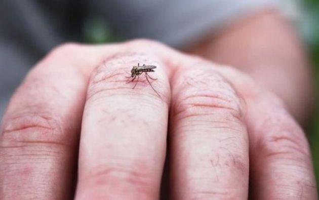Los entes de control planean realizar una limpieza de criaderos del mosquito transmisor de la enfermedad.