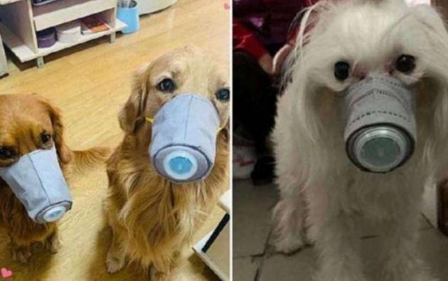 Hay alertas sobre el sacrificio de algunos animales para frenar el coronavirus.