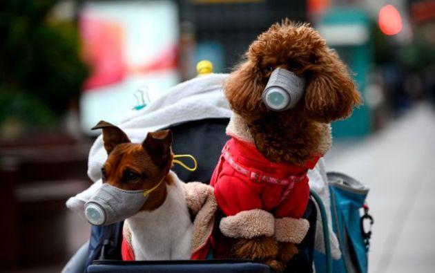 Hasta el momento no existen pruebas de que las mascotas puedan contagiarse o transmitir el coronavirus. Foto: AFP.
