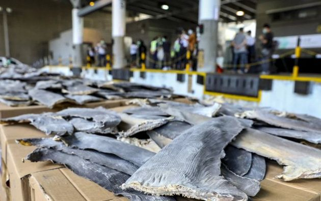El Departamento de Aduanas de Hong Kong interceptó un cargamento récord de aletas de tiburón, 26 toneladas.