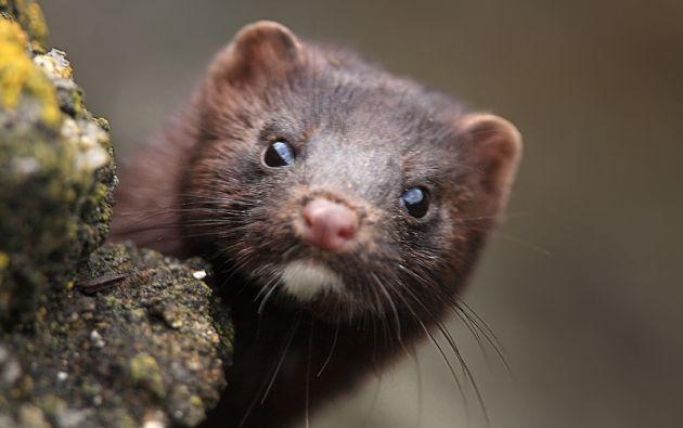 Sería la primera vez que se tiene registro del contagio directo de un animal a un humano.