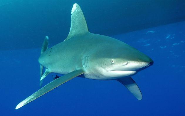 La decisión se produce después de que a inicios de mayo la aduana de Hong Kong decomisara dos contenedores de aletas de tiburón marcados con etiquetas de Ecuador.
