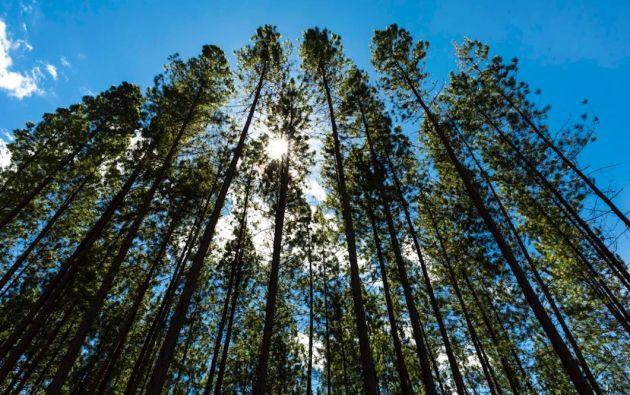 La materia prima que usa Smurfit Kappa para la producción de sus soluciones de empaque de papel proviene de plantaciones forestales certificadas y del reciclaje. Foto: cortesía.