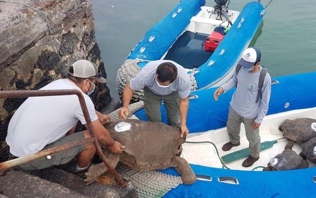 Diego regresa ahora a la isla Española con sus 14 compañeros de proyecto, al considerar los expertos que no existe más el peligro de extinción. Foto: EFE