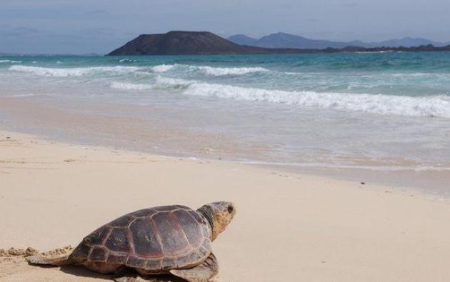 """El Ministerio de Ambiente promueve desde este lunes una conferencia virtual denominada """"Ecuador: país de tortugas marinas"""". Foto: EFE."""