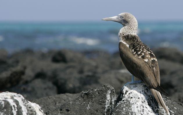 Las islas fueron declaradas Patrimonio de la Humanidad por la UNESCO