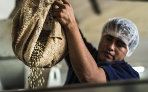En 2019, Ecuador produjo 36,060 kg de café. Los dos grandes países cafetaleros del mundo como Brasil y Vietnam, país asiático que ya rebasó a Colombia, superaron el millón y medio de kilos.