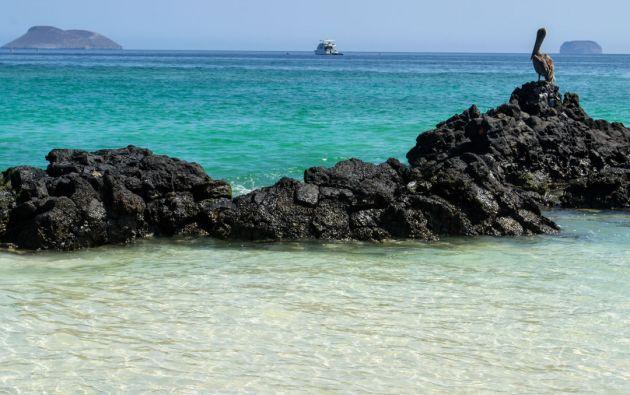 Galápagos figura entre las cinco primeras áreas protegidas más grandes de la costa del Pacífico. Foto: archivo