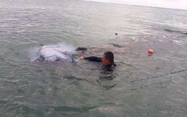 Los expertos debieron liberarla de las mallas de pesca enredadas en sus aletas pectorales.