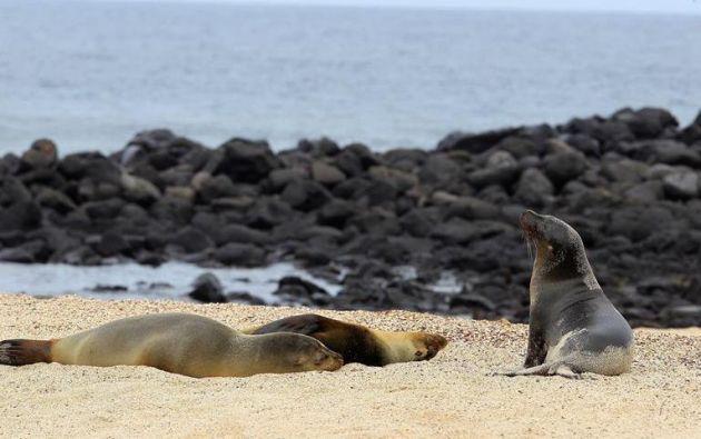Los pesqueros chinos faenan fuera de la zona económica exclusiva de 200 millas en torno a la reserva natural de las Islas Galápagos. Foto: EFE