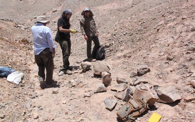 El desierto de Atacama esconde tesoros paleontológicos de hace 160 millones de años. Foto: EFE.