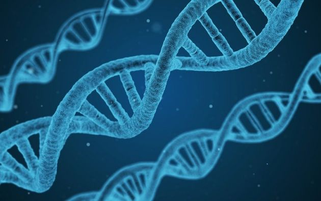 El estudio del Centro de Investigaciones Biológicas Margarita Salas analiza la resistencia de las células a las lesiones. Foto: Pixabay