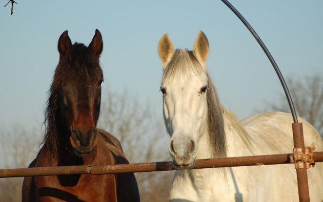 Desde febrero de este año se han encontrado alrededor de 30 equinos cortados o destripados en todo el territorio francés. Foto: Pixabay