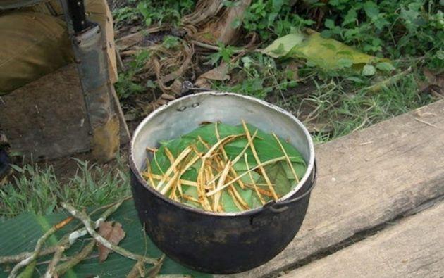 La ayahuasca es resultado de mezclar dos plantas amazónicas: la enredadera de ayahuasca (Banisteriopsis caapi) y el arbusto chacruna (Psychotria viridis). Foto: EFE