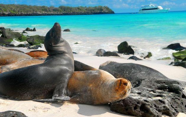 Galápagos se sumó a los destinos ecuatorianos que cumplen con las medidas de higiene y sanitización.