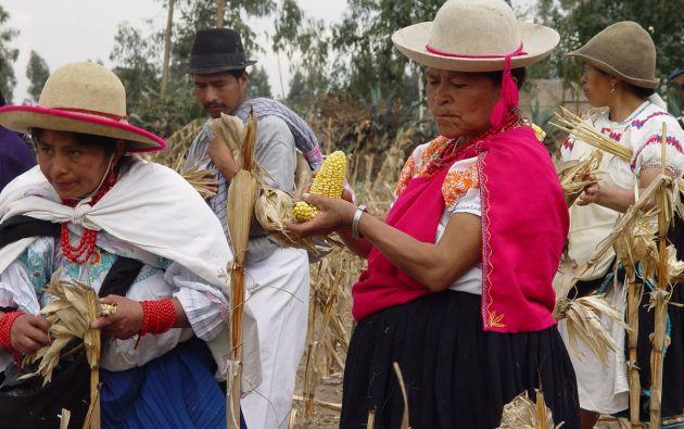 La agricultura proporciona alrededor del 26% del empleo y representa más del 20% de los ingresos de la población en Imbabura, Pichincha, Cotopaxi y Bolívar, según la FAO en Ecuador. Foto Vistazo.
