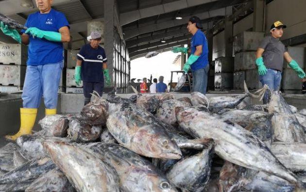 A partir de este lunes y hasta el 4 de diciembre, se desarrollarán reuniones donde se tratarán temas relacionados a las medidas de conservación de atunes tropicales . Foto: EFE