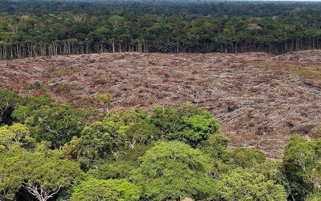 Foto de archivo de árboles talados en la selva amazónica (Brasil). Foto: EFE
