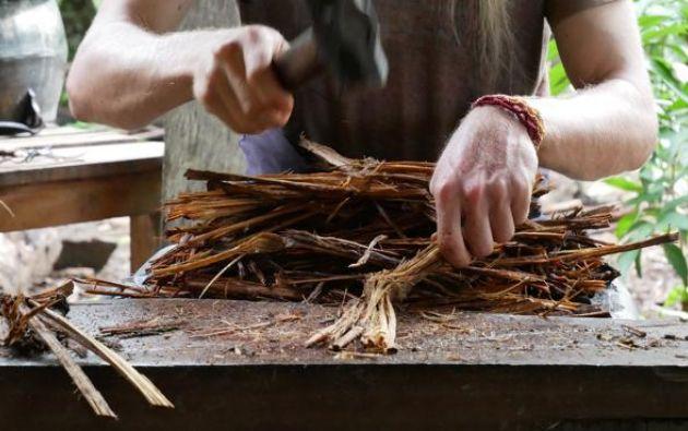 La ayahuasca se prepara a partir de lianas de bejuco y hojas de plantas como la chacruna.