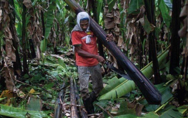 Gran parte de los trabajadores vivían desde hacía varias décadas en las haciendas de la empresa en la provincia de Santo Domingo. Foto tomada del portal Furukawa Nunca Más