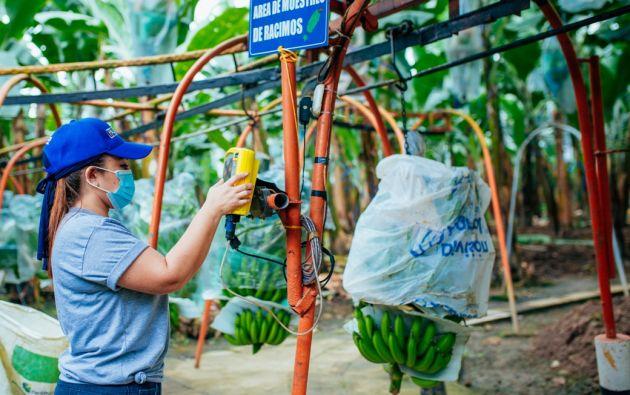 El sector bananero superó varios desafíos en 2020 y cerró con récords en las exportaciones.