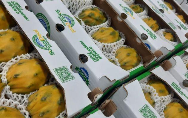 La fruta salió desde el Puerto de DP World Posorja. Foto: Cortesía.