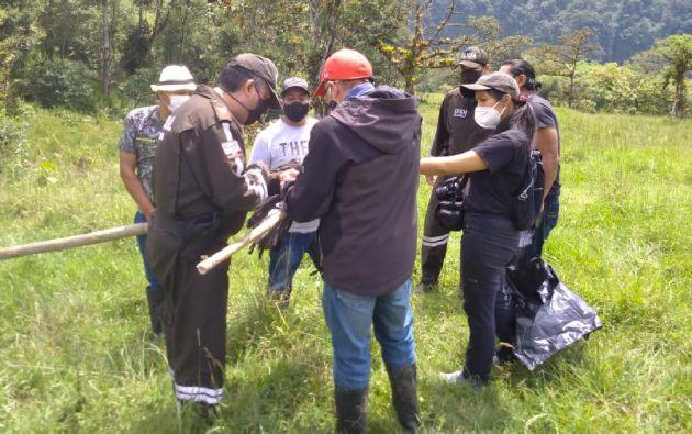 El águila andina se encuentra en peligro crítico de extinción según el libro rojo de aves del Ecuador.