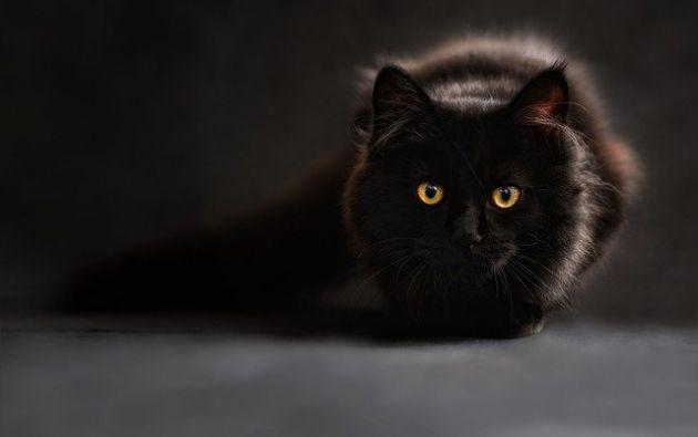 """Según Daily Mail, un portavoz del Centro de Adopción de Protección de Gatos de la Isla de Wight dijo: """"Ayer acogimos a un gato de Binstead que había aparecido como un callejero hace seis años y se mudó allí."""" Foto: Pixabay."""