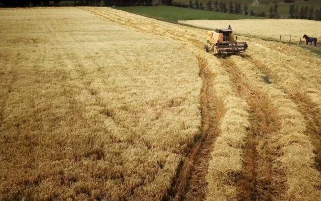A través de asistencia técnica, maquinaria, capacitación y opciones de financiamiento, se ayuda a los pequeños productores.
