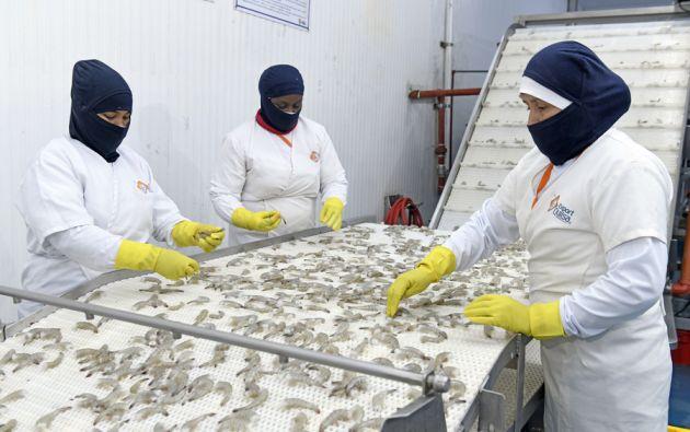 Exportquilsa exportó el 2020 alrededor de un millón de libras de camarón a Canadá, Sudáfrica, Italia, España y Trinidad y Tobago. Foto Vistazo.