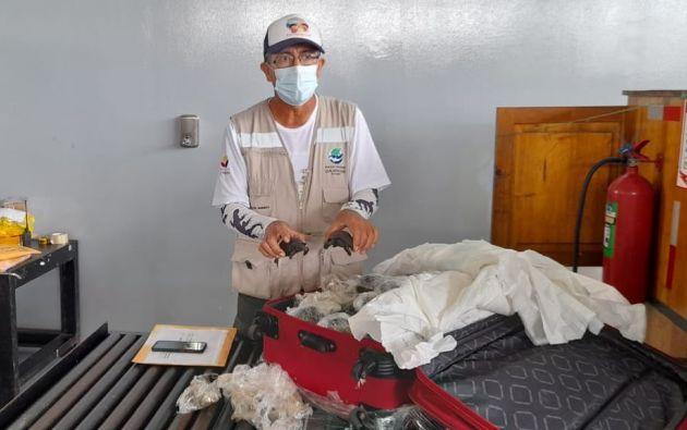 Hallaron equipaje con tortugas bebés procedentes de Galápagos. Foto: Ministerio del Ambiente
