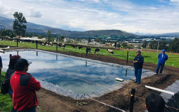 A través de su programa de ganadería sostenible Nestlé ha implementado procesos amigables con el ambiente como piscinas de oxidación para reutilización del agua.