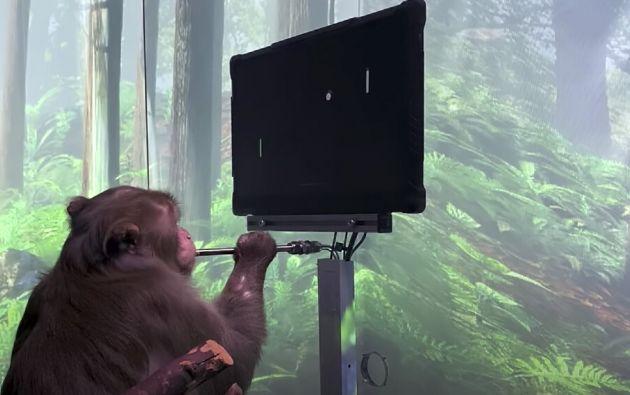 """El equipo de Neuralink desconecta el joystick y Pager sigue jugando sin utilizar nada más que su implante cerebral.  Bienvenidos al nuevo juego """"MindPong""""."""