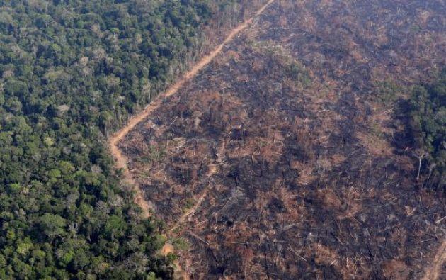 La Amazonía perdió 2,3 millones de hectáreas en 2020, su tercer peor registro. Foto: Archivo