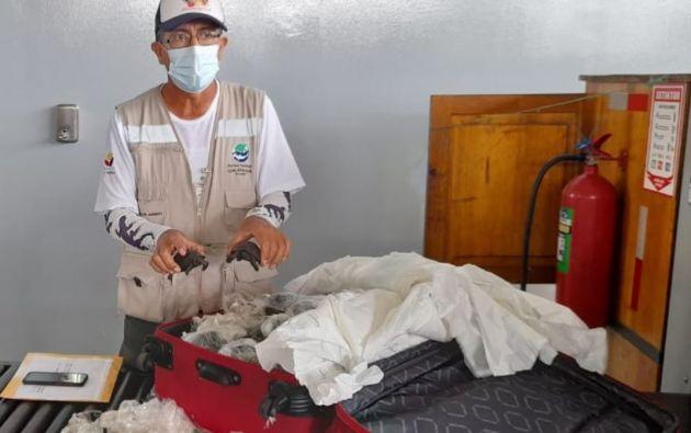 Las tortugas iban a ser sacadas de Galápagos dentro de una maleta, y fueron descubiertas gracias a una revisión de rayos X.
