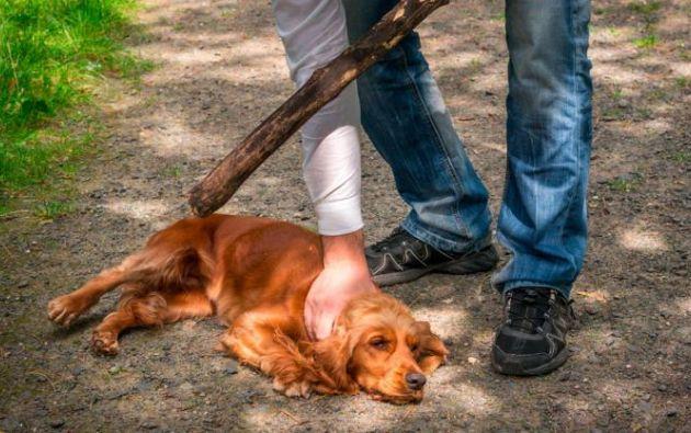 Pineda aceptó el delito de maltrato animal agravado. La perrita fue rescatada y llevada a un veterinario.