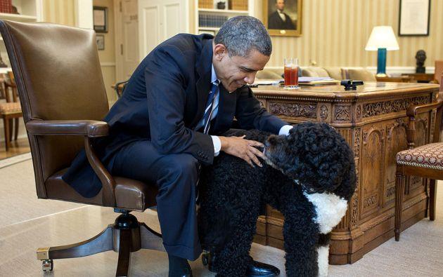 Barack Obama y Bo en la Oficina Oval de la Casa Blanca. Foto: Pete Souza / White House