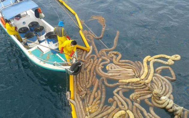 Guardaparques trabajando para recoger sustancias vertidas por encallamiento. Foto: Parque Nacional Galápagos