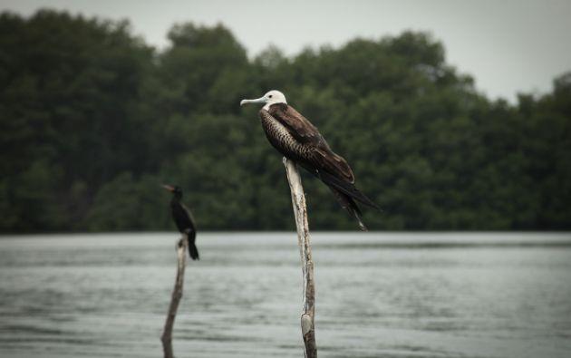 Aves nativas de la zona.